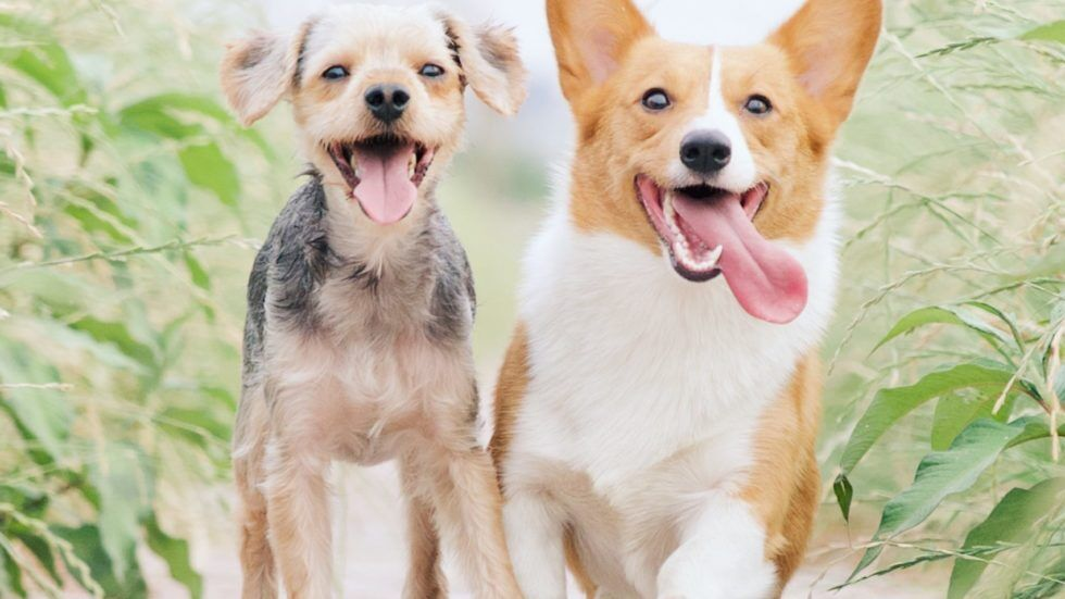 Pet Boarding vs. Pet Sitting: Which is the Best Option for You and Your Pet?