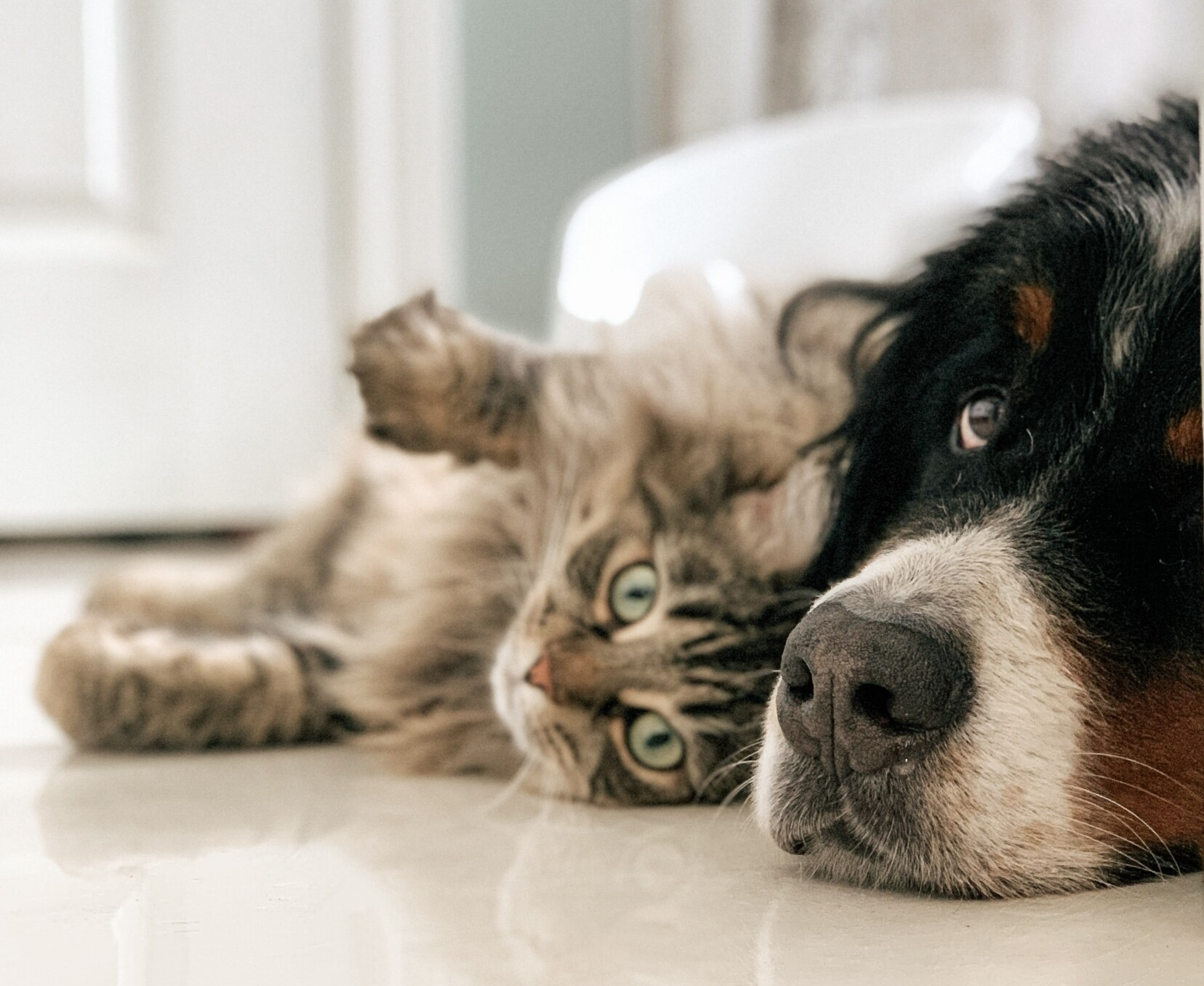 Dog vs. Cat – Which Pet Suits You & Your Lifestyle