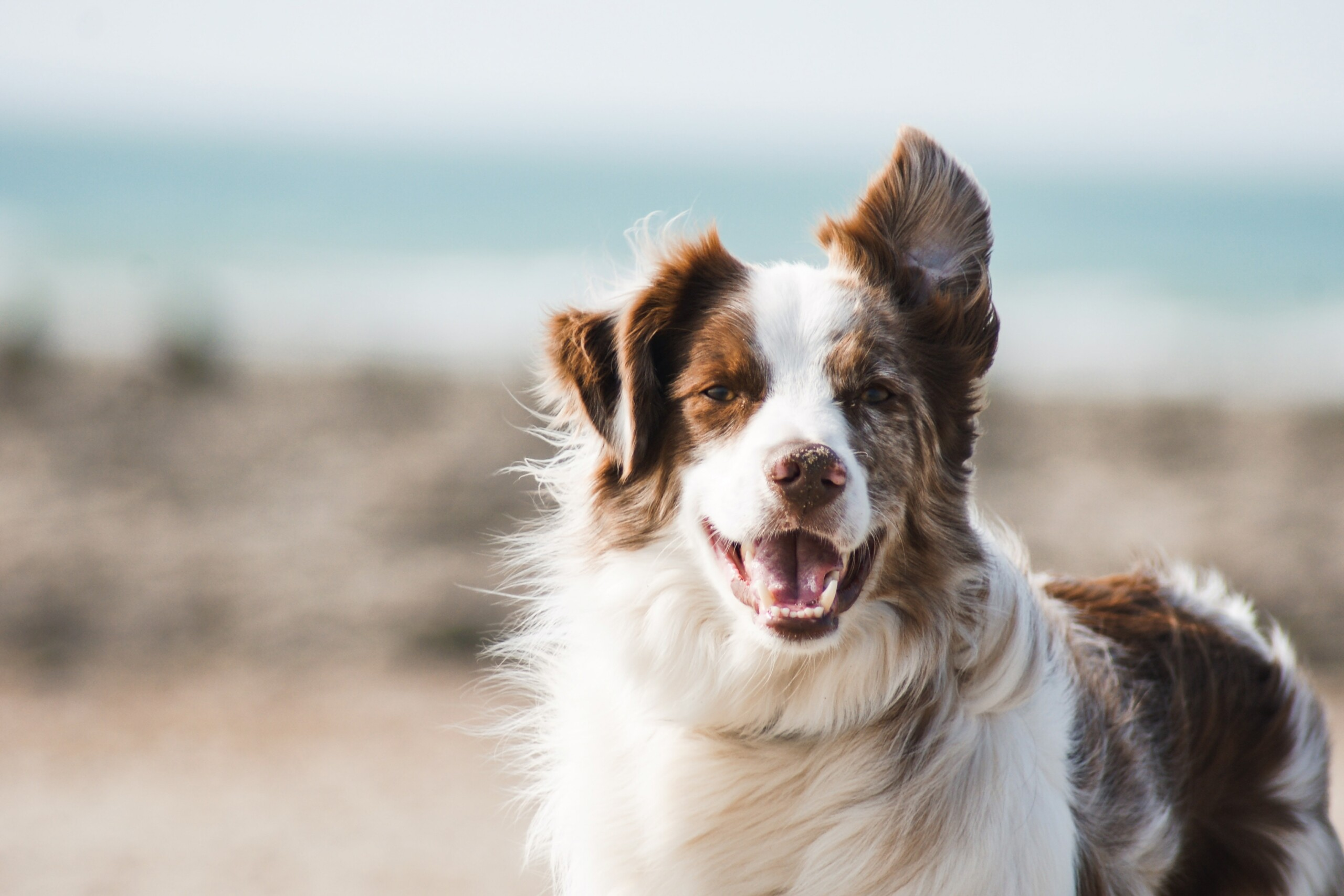 The 17 Best Tips to Keep Your Pet Healthy