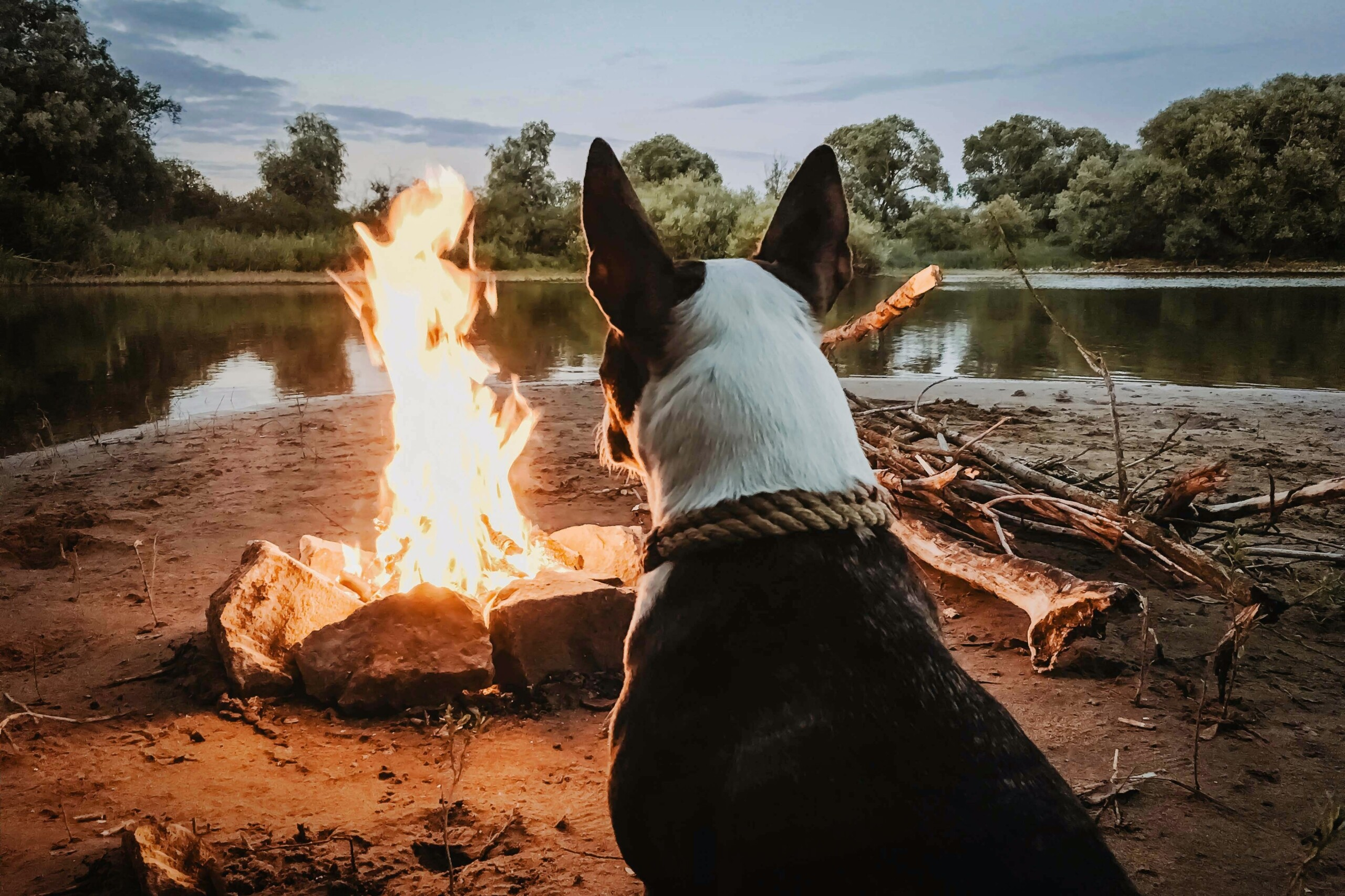 The Best Summer Activities for You & Your Pet